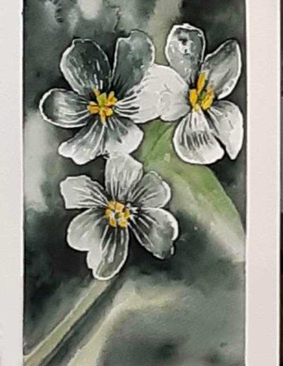 Dipinto ad acquerello eseguito da allievi, raffigurante fiori di gatto.